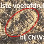 De juiste voetafdruk bij ChiWalking